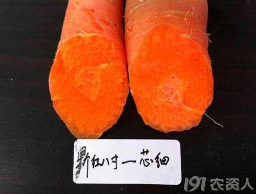 三红 胡萝卜 品种