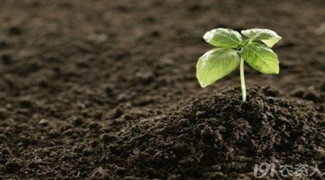 通气性等优良的理想的肥沃土壤