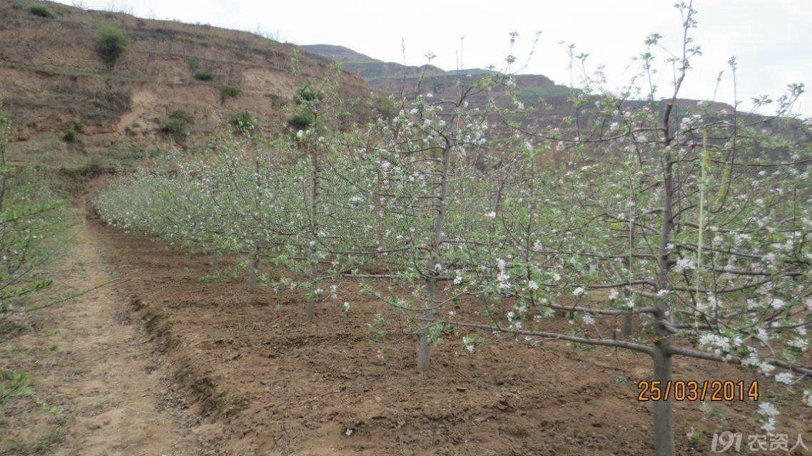 苹果春季如何合理施肥?
