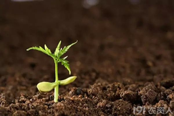 土壤小动物是不是去过去了
