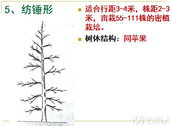 191公开课——桃树整形修剪技术(下)