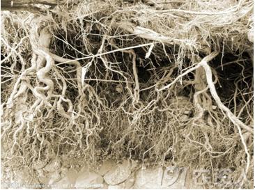 影响树木根系生长的因素