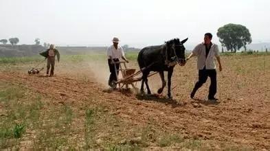 农家肥经典知识问答