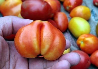 预防番茄畸形不能缺少盈辉杀线剂