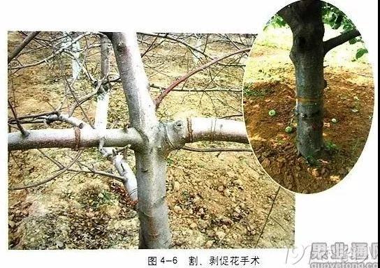 汪景彦教授的苹果树修剪技术 看过的都说非常好