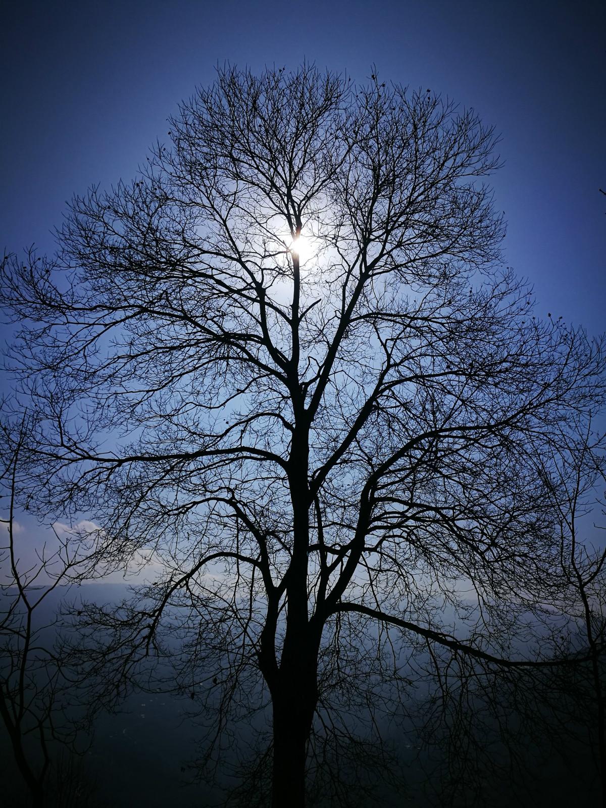 全村位置最高的一棵板栗树