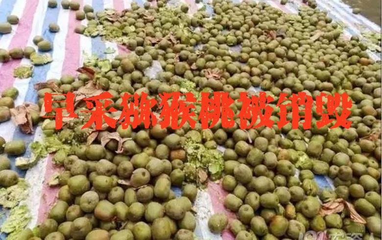 300多斤猕猴桃被没收销毁!