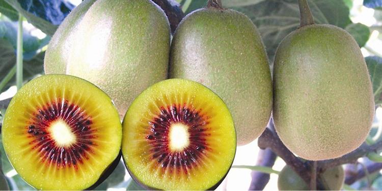 猕猴桃种植环境所需条件