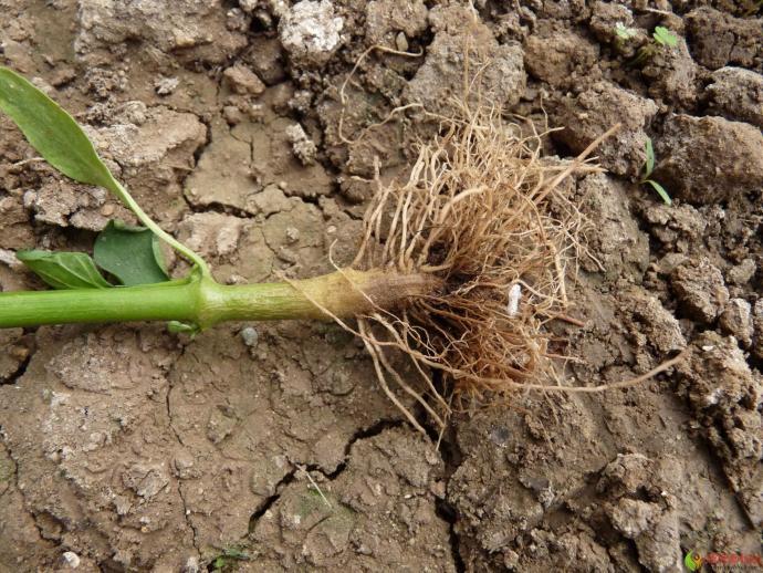 植物根部结构图
