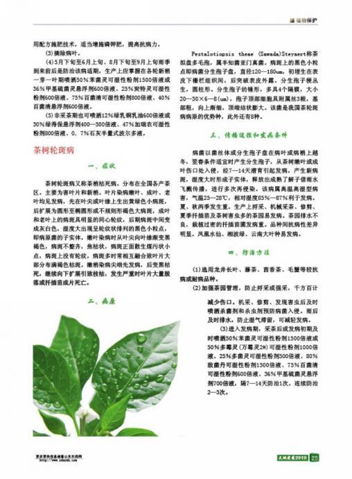 茶树炭疽病,轮斑病及防治方法