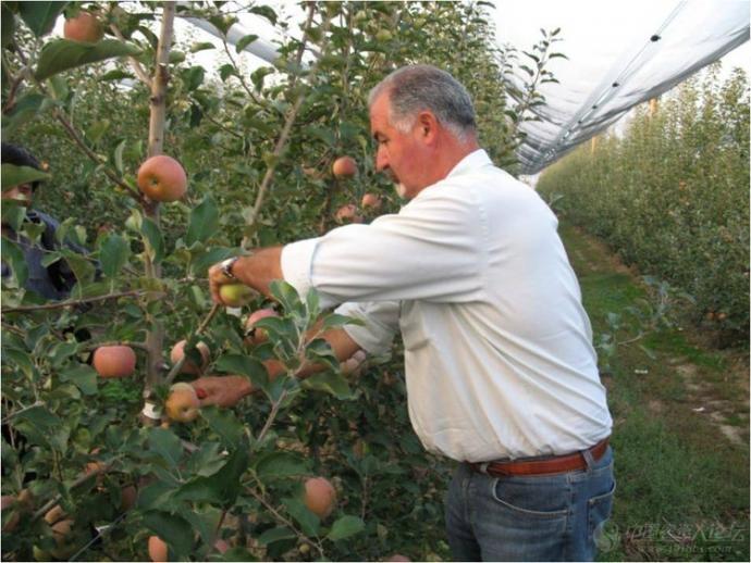 苹果树常用的整形方法