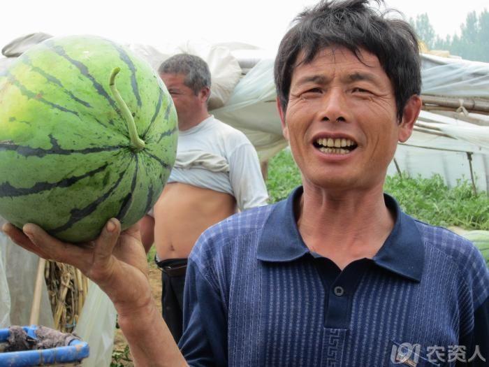 西瓜新品种—丰冠_种子天地