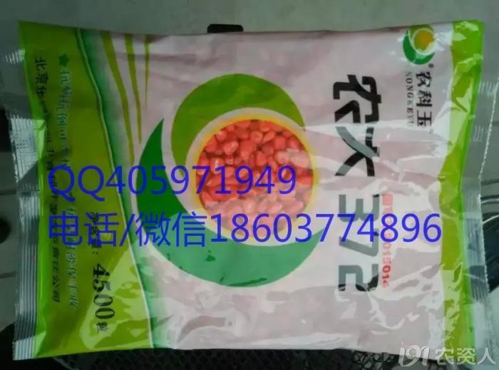 裕丰303玉米种子图片1