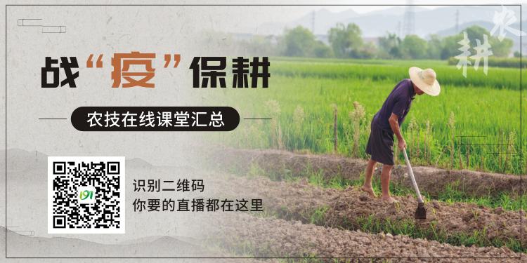 <b>戰疫保耕,農技在線課堂匯總</b>